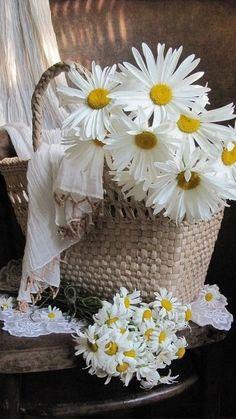 Daisy's Beautiful Flowers Images, Beautiful Flower Arrangements, Flower Images, White Tulips, White Flowers, Barn Wedding Photos, Daisy Love, Bouquet Wrap, Gerbera