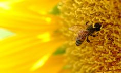 Morning AG Clips :: Bee deaths may stem from mutating virus
