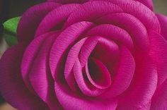 Hoy vamos a hacer una rosa de papel y nos sentiremos transportados al reino de Lilliput o al país de las Maravillas, porque estas flores de papel gigantes crean un efecto decorativo fantástico como en un cuento de hadas. Si te gustan las flores de papel esta manualidad te va a encantar, pues haciendo una sola rosa cr