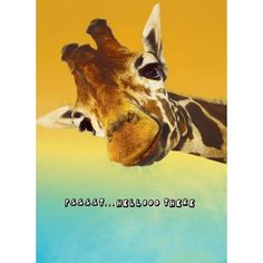Printed in the USA on paper from managed forests. Comes with color-coordinated envelope. Packaged in cello jacket. Features a mirror finish. - Inside Greeting: Just wanted to say Happy Birthday! Giraffe Quotes, Giraffe Art, Giraffe Pictures, Animal Pictures, Funny Pictures, Baby Animals, Funny Animals, Cute Animals, Birthday Wishes