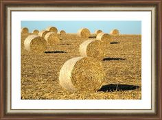 20%Off Code XLRLEB #fineart #art #gifts Corn Bales Framed Print By Bonfire Photography