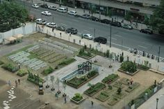 A Garden in a Vacant Lot in Downtown Philadelphia.