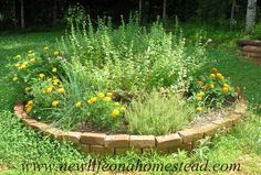 Herb Bed 2013