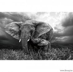 XX-PR Interiors Glaskunst Glazen Kader glaspaneel olifant en babyolifant II 120x80 in zwart wit