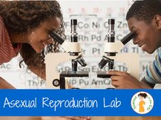 a lab activity where students view two examples of asexual reproduction under a microscope, read about asexual reproduction, and then record their observations and answer summary questions.