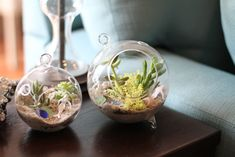 Tiny terrariums add unique appeal to small side tables or skinny shelves.