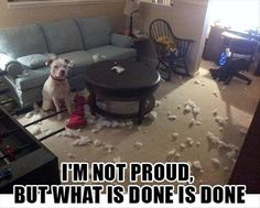 Top 10 best funny dog pictures with quote 2013