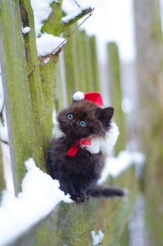 Teeny tiny Santa kitty. AHHHHH <33