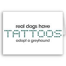 Joey chandler greyhounds at play on pinterest for Greyhound ear tattoo meaning
