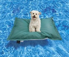 Dog Pool Float awesome!!!