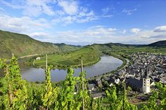 Bremm, Mosel, vineyards