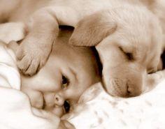 VÝZKUM: Psí prach chrání děti před běžnými viry a vznikem astma | Psí úsměv