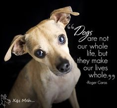 Dogs are now our whole life, but they make our lives whole.