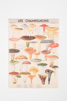 Mushroom Specimen Poster