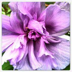 Tree Flower Bloom