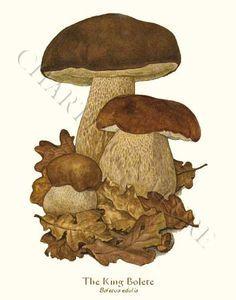 King Bolete mushroom art print