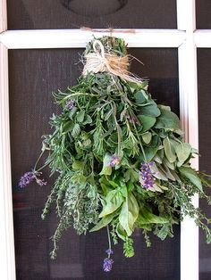 Every year I plant lavender, rosemary, parsley, sage, lemon thyme, chives, dill, mint, basil and oregano.