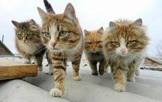 Reservoir Cats :: Mr. Brown, Mr. Orange, Mr. Pink, and Mr. White.