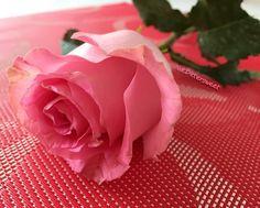 """""""Glück entsteht oft durch Aufmerksamkeit in kleinen Dingen.""""   Diese hübsche Rose kam vor ein paar Tagen überraschend bei mir an und ich habe mich sehr darüber gefreut.  Vielen herzlichen Dank liebes @treaclemoon_deutschland Team.  #thankyou #pink #rose #pinkrose #prettyrose #surprise #sweet #sweetsurprise #treaclemoon #treaclemoon_deutschland #love #lovely #flower #floweroftheday #flowermagic #flowerpower #monday #montag #instablogger #instabeauty #beautyblogger #bblogger #blogger_de…"""