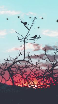 Gorgeous colours and a stunning silhouette of branches, dreamy.
