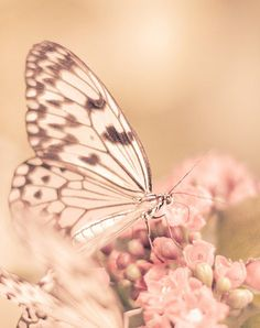 butterfly I #NEW1SPRING