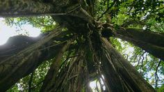 Rainforest | Gorongosa National Park