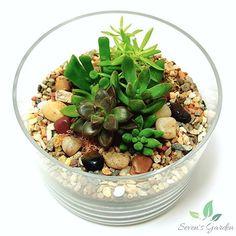 Succulent terrarium #SevensGarden