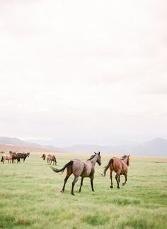 Wild herd of horses All The Pretty Horses, Beautiful Horses, Animals Beautiful, Cute Animals, Wild At Heart, Equine Photography, Scenery Photography, Night Photography, Landscape Photography