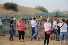 evening desert safari in dubai by Desert  Safari Tours  on 500px