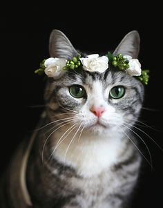 Flower Crown for Cats. What is prettier than a cat? A cat wearing a flower crown!
