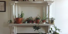 The Best Starter Houseplants & How To Care For Them Food52