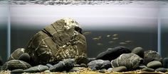 Between A Rock and a Hard Place – How to Hardscape you Aquarium
