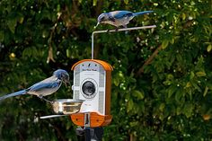 Bird Photo Booth Lets You Take Up Close Pics Of Flying Feathered Friends. New Technology