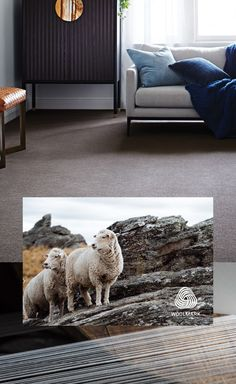 Why wool carpet? Hycraft is a stunning and versatile range of the finest wool carpets for every home. Its natural wool properties make it ideal for every climate; insulating for warmth in winter and providing cooling relief from the heat in summer. With beautiful textures and earthy, muted tones, there's a luxurious Hycraft carpet for all interior spaces. Wool Carpet, Beautiful Textures, Earthy, Carpets, Shag Rug, Range, Spaces, Cool Stuff, Natural