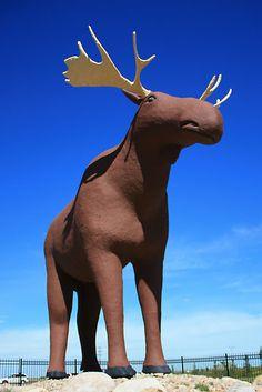 Mac the Moose, Moose Jaw, Saskatchewan Canada, Come And See, Banff, North America, Moose Art, Road Trip, Mac, Travel, Animals
