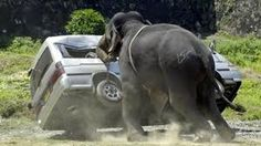 HTWB angry elephant