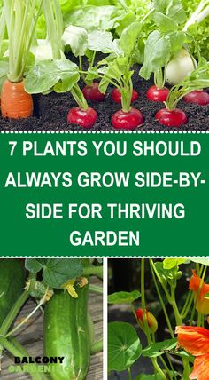 Gardening Tips, Balcony Gardening, Garden Plants, Container Gardening, Indoor Plants, Planting Vegetables, Growing Vegetables, Veggies, Growing Seeds
