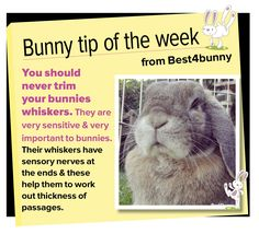 Bunny tip week - 21 Don't mess with their whiskers!