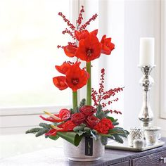Luxury Christmas Amaryllis. This designer Christmas arrangement is a modern take on a dramatic festive centrepiece. A designer centrepiece in shimmering red tones that's both striking and glamorous, this is a very memorable gift that's sure to be a talking point amongst friends and family for all the right reasons
