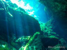 Experience the beautiful underwater world of the cenotes.  #tourguidekay #privatetours #kaytours #cenotes #rivieramaya #playadelcarmen #tulum #cancun #mexico #traveltips