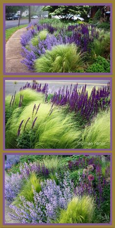 purple house plant [Oh what a little purple can do to compliment ornamental grasses!] Landschaftsbau Landschaftsbau The post [Oh what a little purple can do to compliment ornamental grasses!] Landschaftsbau appeared first on Gartengestaltung ideen. Ornamental Grass Landscape, Ornamental Grasses, Flower Landscape, Landscape Grasses, Landscape Fabric, Landscape Edging, Landscaping Jobs, Front Yard Landscaping, Landscaping With Grasses
