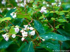 Dewed Wildflowers