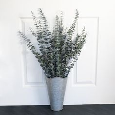 This California grown baby eucalyptus bunch is preserved for long-lasting beauty and natural fragrance. Perfect for use in floral arrangements all year long and for special occasions such as weddings. Each baby eucalyptus bunch is arranged by hand and weight; stem count will vary from depending on thickness and size. Stems are naturally grown and dried in California; preserved with vegetable glycerin. Dried Eucalyptus, Eucalyptus Branches, Poinsettia Plant, Silk Orchids, Potted Trees, Decor Pillows, Flower Branch, Silk Flower Arrangements, No Plastic