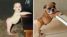 Mi mejor amigo: Mi perro: bebes y cachorros / baby and puppies