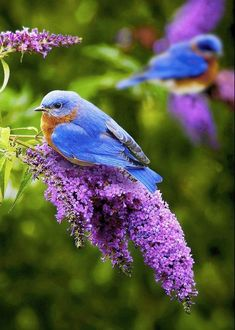 PURPLE LILACS WITH BLUE BIRDS