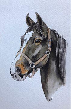 Watercolor Horse, Watercolor Animals, Watercolor Paintings, Horse Drawings, Animal Drawings, Art Drawings, Animal Paintings, Horse Paintings, Horse Portrait