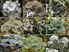 The genome of a well-known fungus reveals hundreds of surprises. Biology Lessons, Ap Biology, Science Lessons, Teaching Science, Life Science, Teaching Ideas, Alien Plants, Middle School Science, School Resources