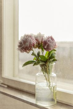 peonies on the windowsill