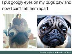 I love pugs!😭😭well it is kinda funny😂 Super Cute Animals, Cute Funny Animals, Funny Cute, Haha Funny, Hilarious, Funny Stuff, Funny Dog Memes, Funny Animal Memes, Funny Dogs