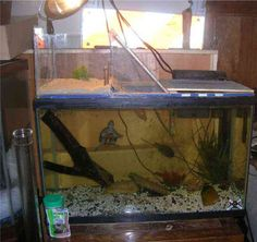 A sample photo gallery of custom made, DIY, pet turtle basking platforms. Above tank and in the turtle tank basking areas are presented. Turtle Setup, Turtle Dock, Turtle Care, Pet Turtle, Turtle Aquarium, Aquarium Fish, Turtle Basking Platform, Franklin The Turtle, Musk Turtle